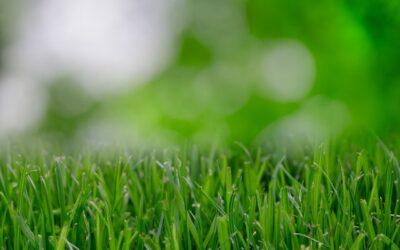 Tips för en grönare trädgård