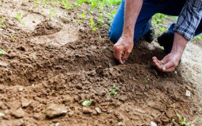 Så lyckas du med din budgetträdgård